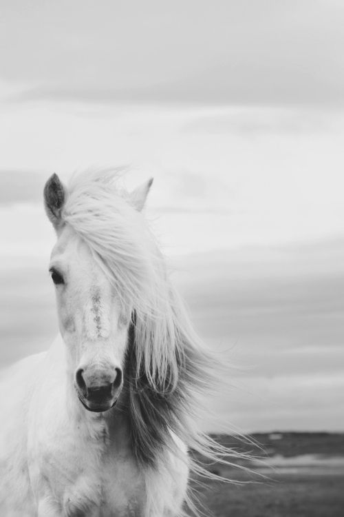 white horse | Tumblr | Cool Animals | Pinterest | White ...