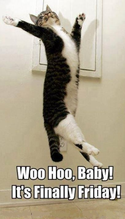 Woo Hoo, Baby!! It's Finally Friday! | Funny Cats and ...