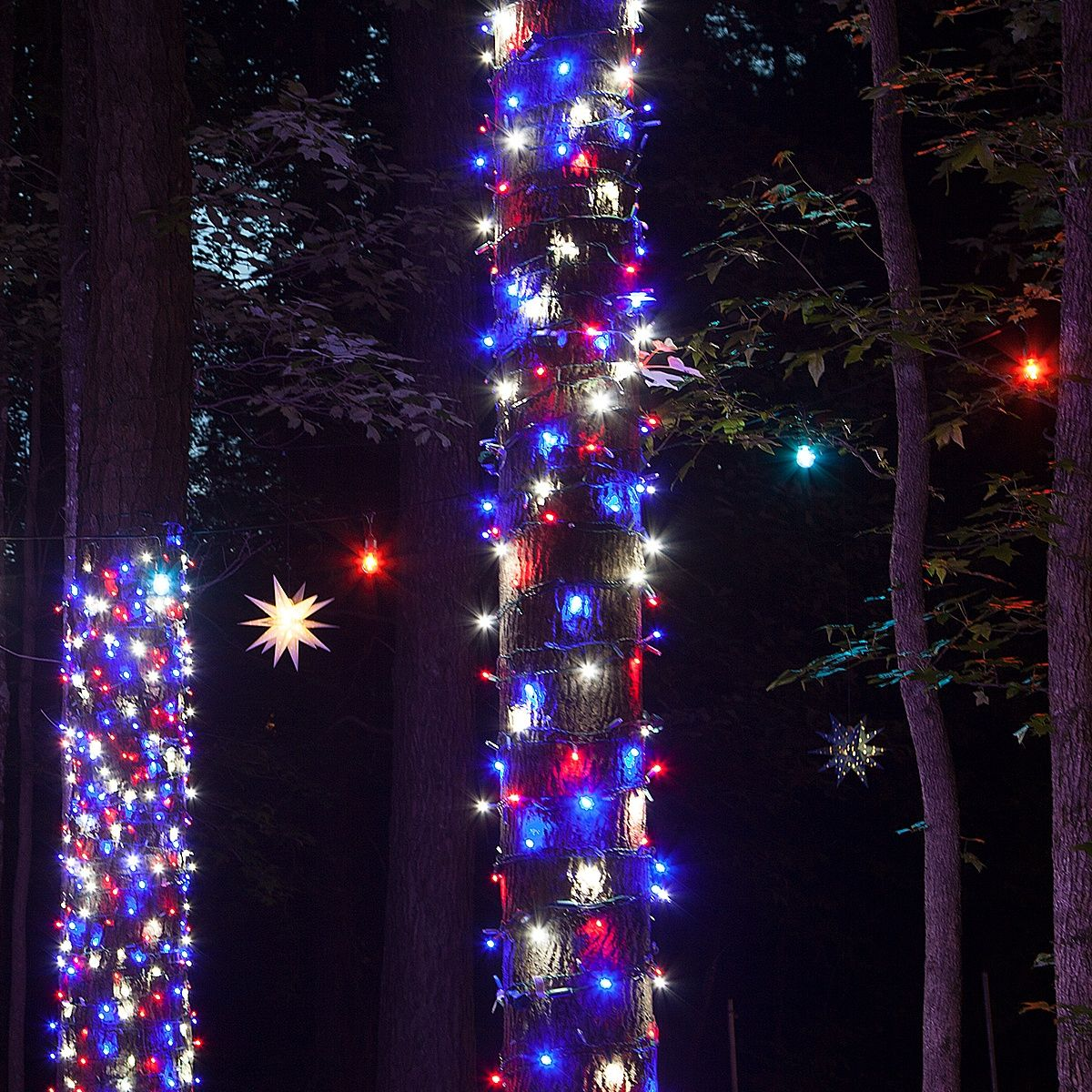 Wrapping Trees With Christmas Lights Christmas Lights Etc In 2020 Christmas Lights Outdoor Trees Blue Christmas Lights Christmas Lights