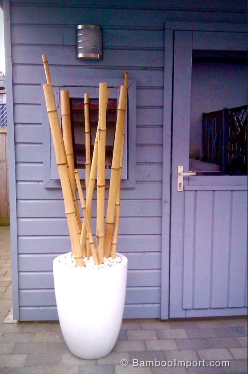 Leuke Bamboe Palen Bamboe Decoratie Bamboe Kamerplant Decor