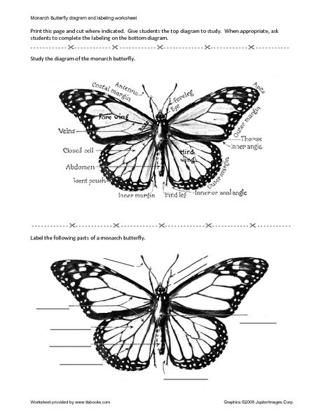 monarch butterfly diagram and labels