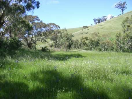 Lush green grass and some rolling hills
