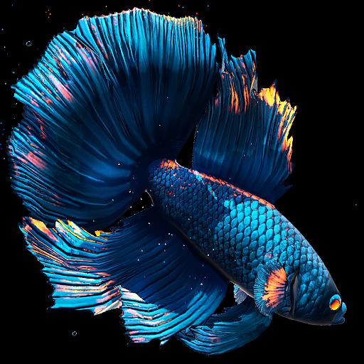 Wow 29 Wallpaper Animasi Ikan Bergerak Untuk Android Betta Fish Live Wallpaper V1 2 Mod Apk4all Com Gambar Wallpaper Animasi I Di 2020 Betta Gambar Bergerak Animasi