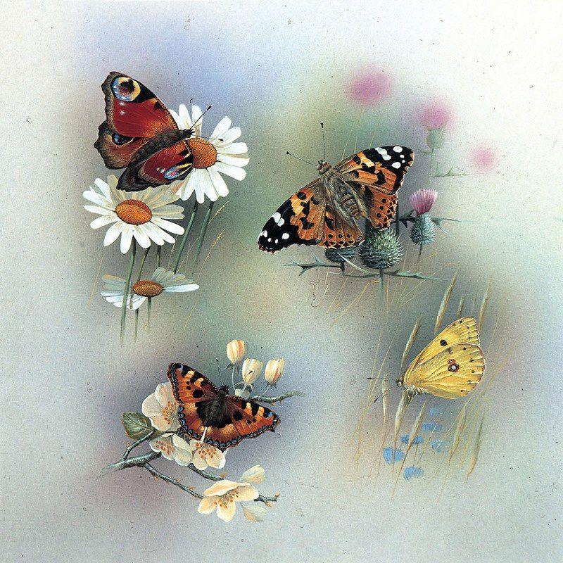 Сохранённые фотографии – 361 фотография | Art, Moth art ...