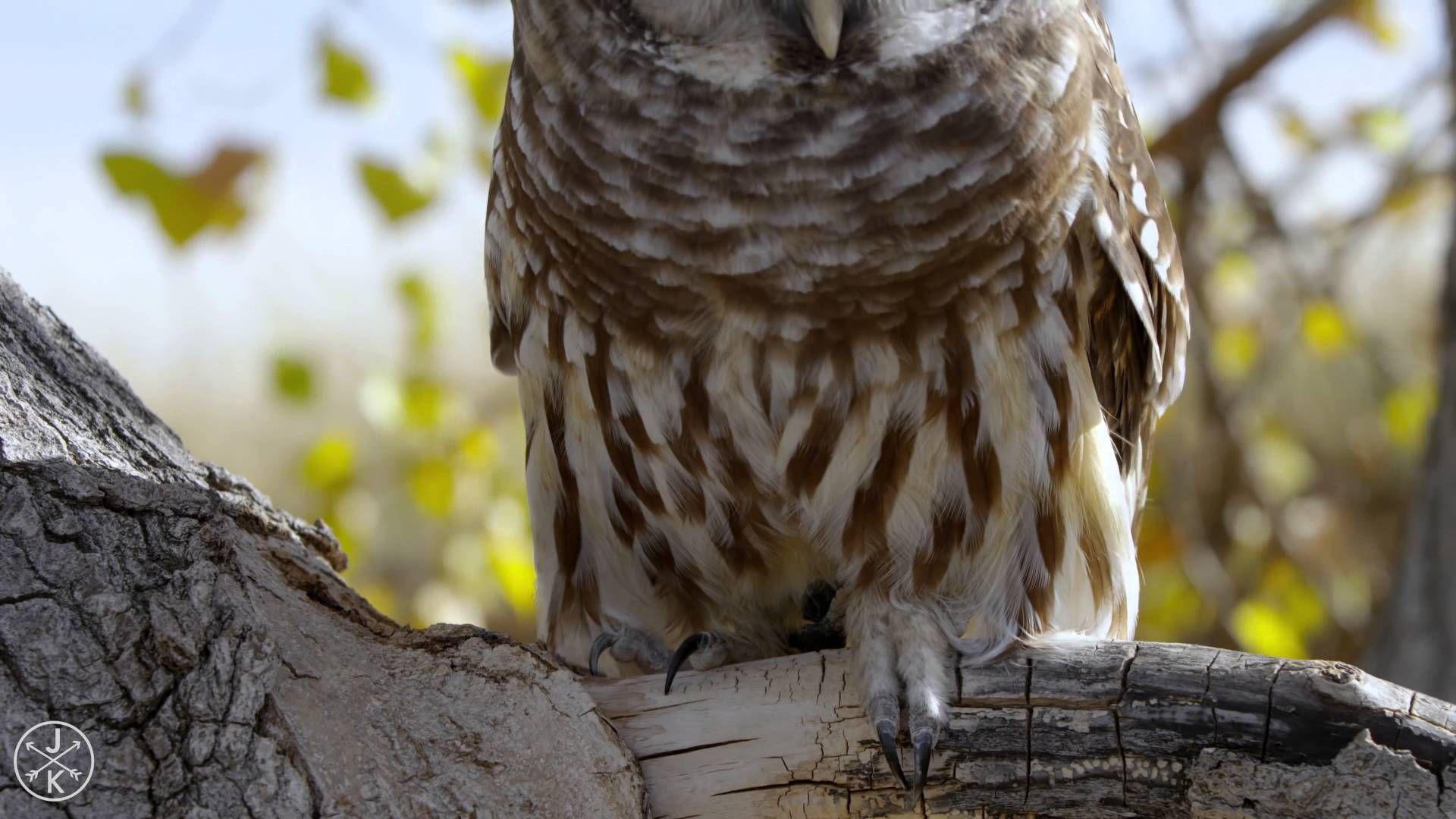 Contemplando las aves 4K (HD) 3D - Apologeticience (+lista de reproducción)