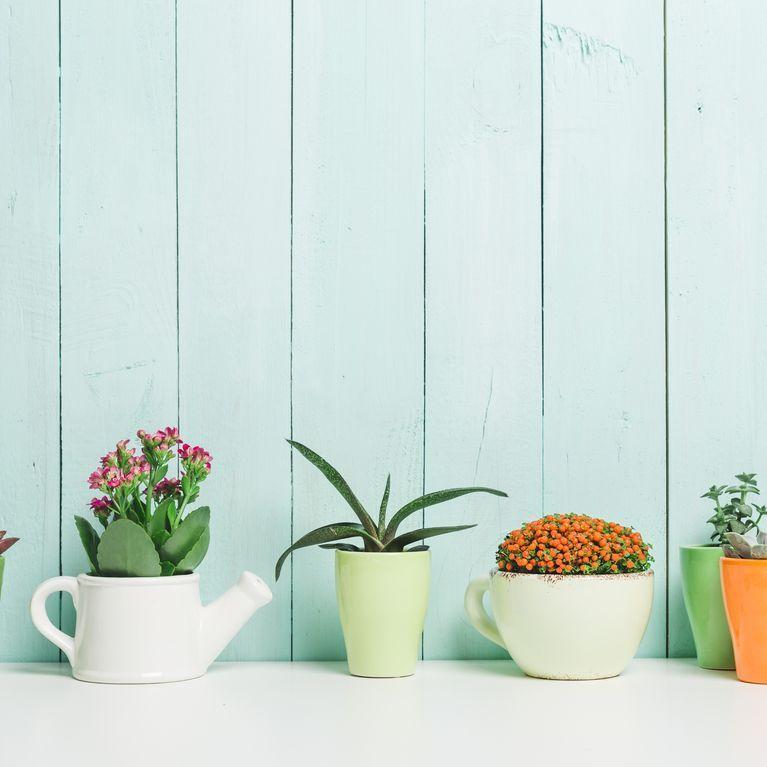 Comment Entretenir Ses Plantes D Interieur Plantes Suspendues