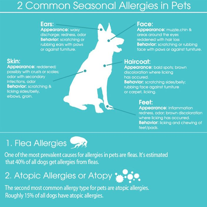 Does Your Pet Have Seasonal Allergies? The Spring Season