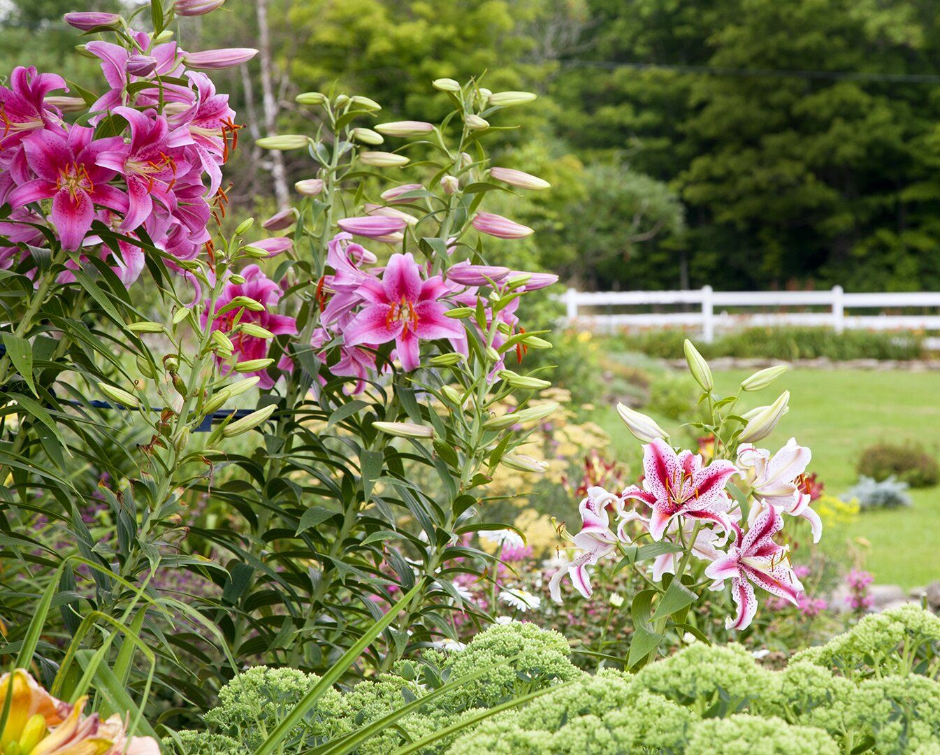 Photo of 19 Colorful Perennials You Need to Have in Your Cutting Garden