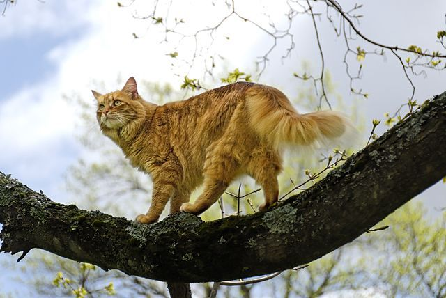 How Can I Let My Cat Go Outside And Keep Him Safe Cats Outside Orange Tabby Cats Tabby Cat