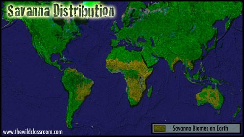 Savanna Biome World Map.This Graphic Shows How Much Of The Worlds Land Surface Is Covered By