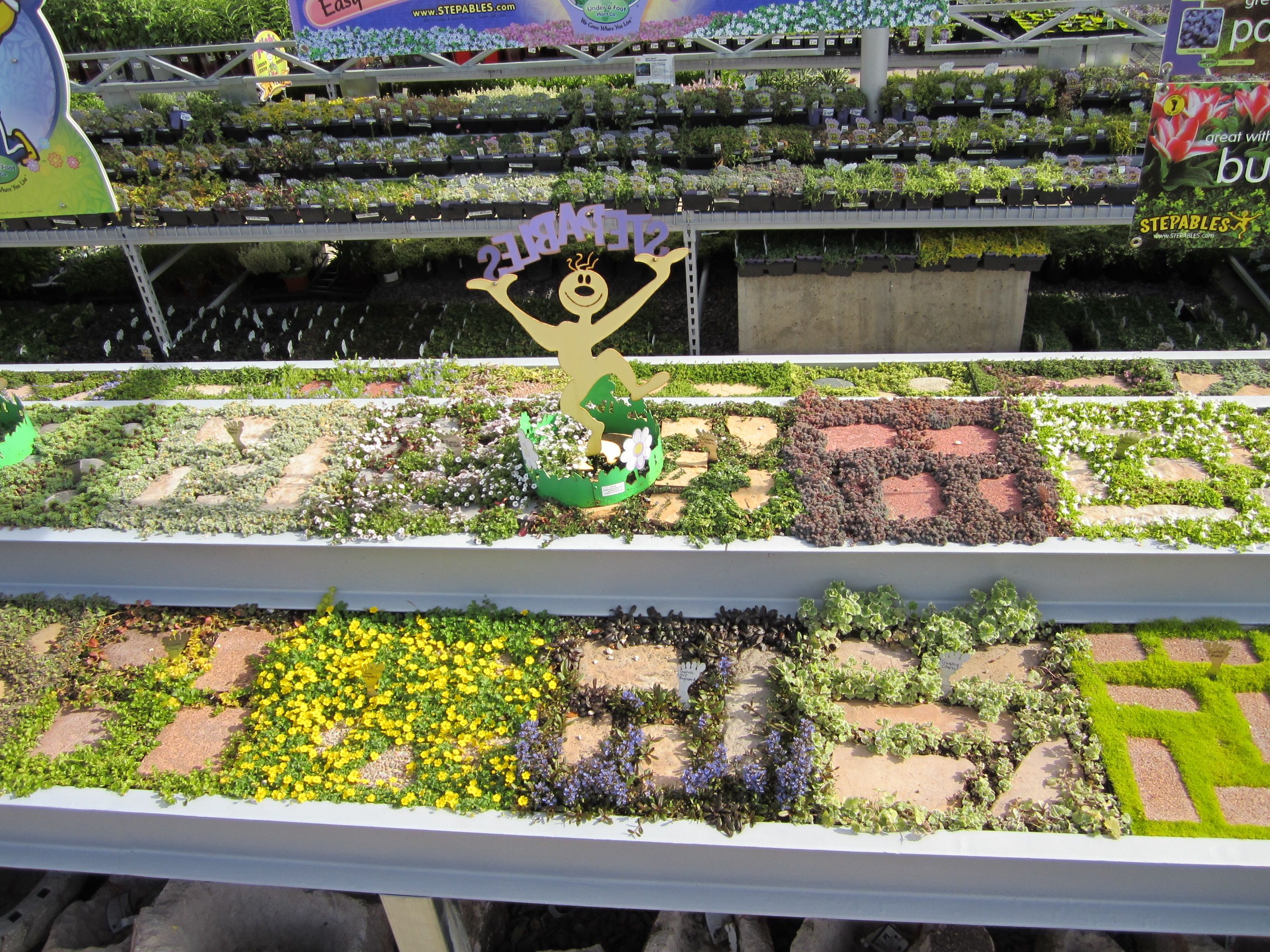 How to plant ground cover between pavers - Our Steppables Display With Plants Such As Irish Moss Scotch Moss Thyme Sedum