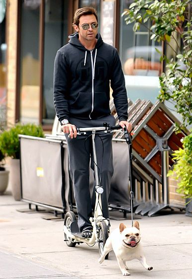 Celebrities And Their Pets Celebrity Dogs Famous Dogs Hugh Jackman