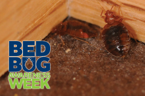 While bed bugs are most often found in bed parts, such as