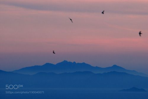 after sunset by mhabermeier  birds after sunset Toscana Italy Italia Tuscany Italien Corsica Scarlino Korsika Elba Toskana mhaber