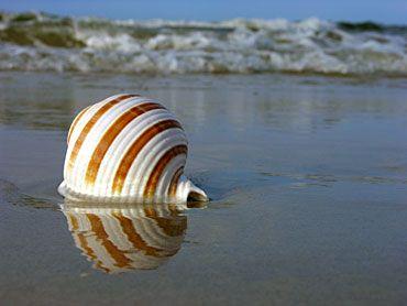 conchas de las mares exóticas