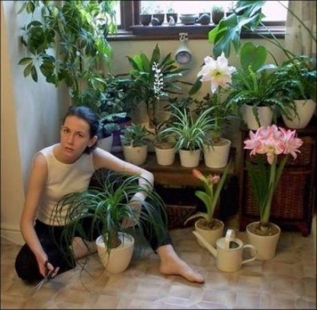 комнатные растения и уход за ними | Растения, Цветы ...