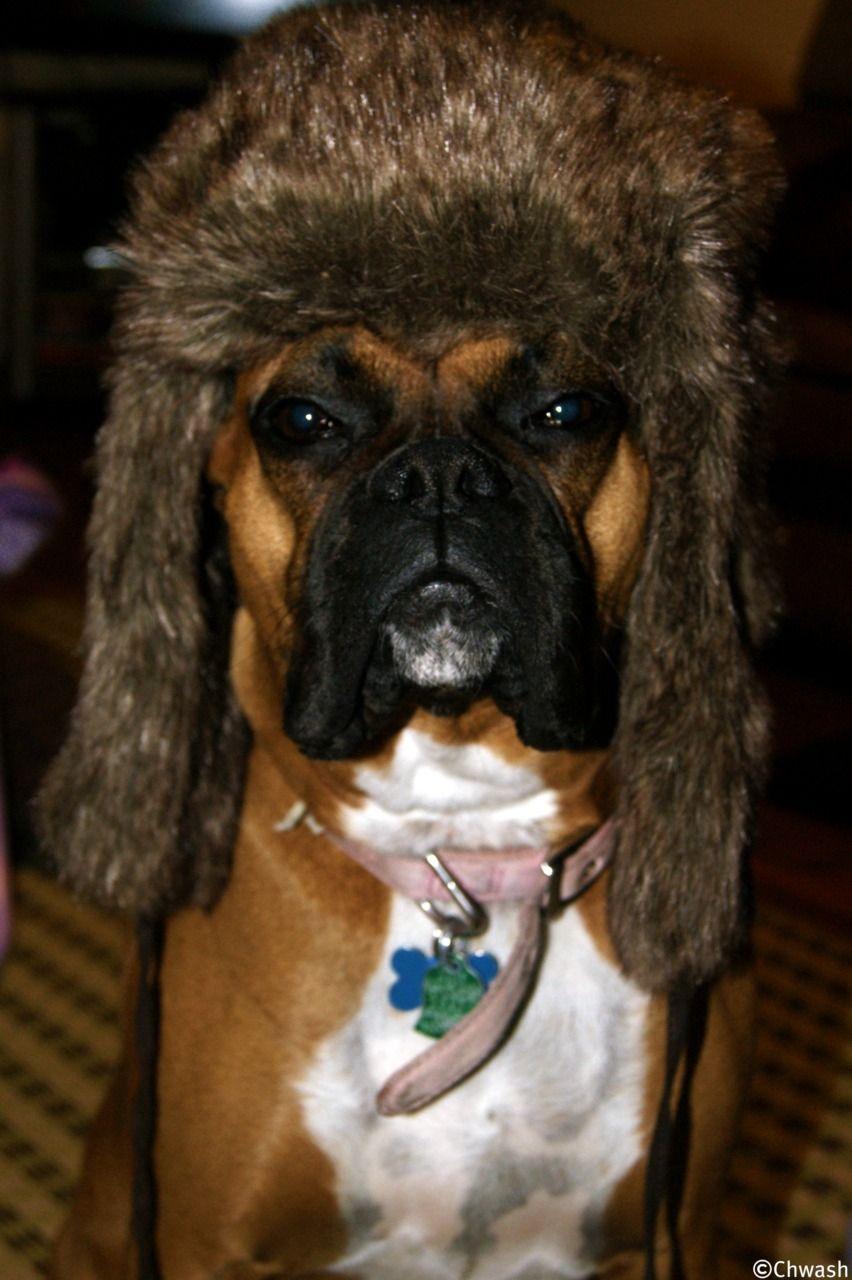 chwash I sometimes like to make my dog wear hats. lol