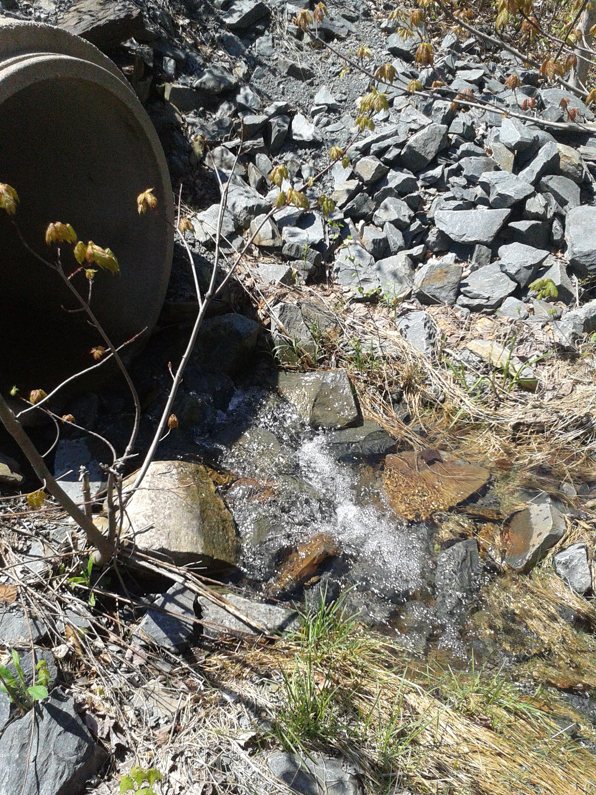 Cute little stream.