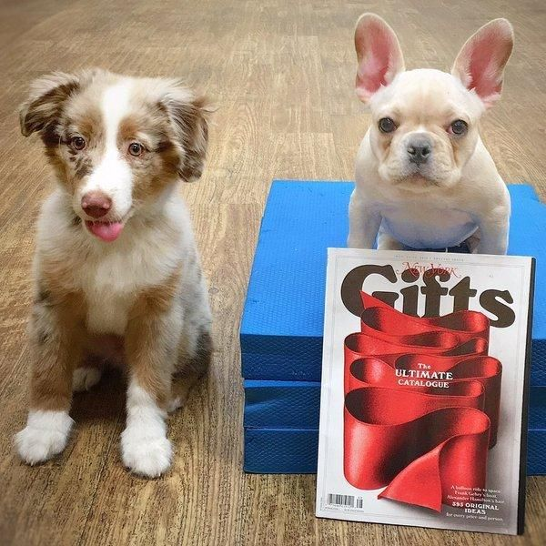 We Seeing Our Training School In Nymag Gift Guide Education