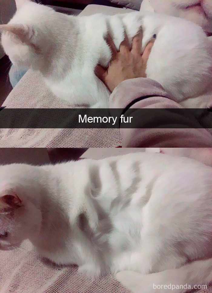 Photo of Snapchats Funny Cats