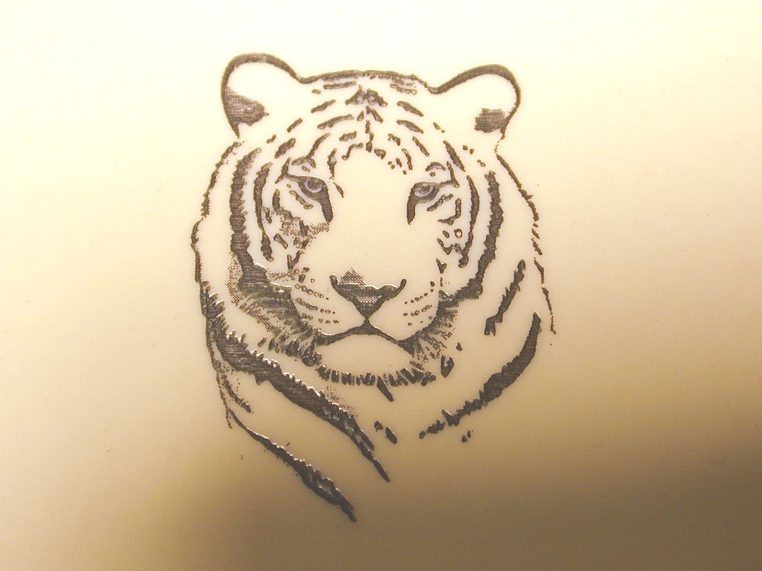 Line Drawing Of A Tiger S Face : White tiger tattoo tatted up