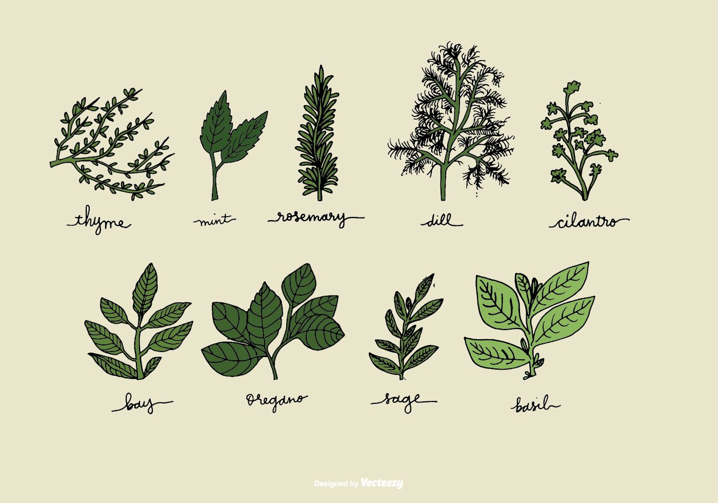 hight resolution of a hand drawn set of herb illustrations