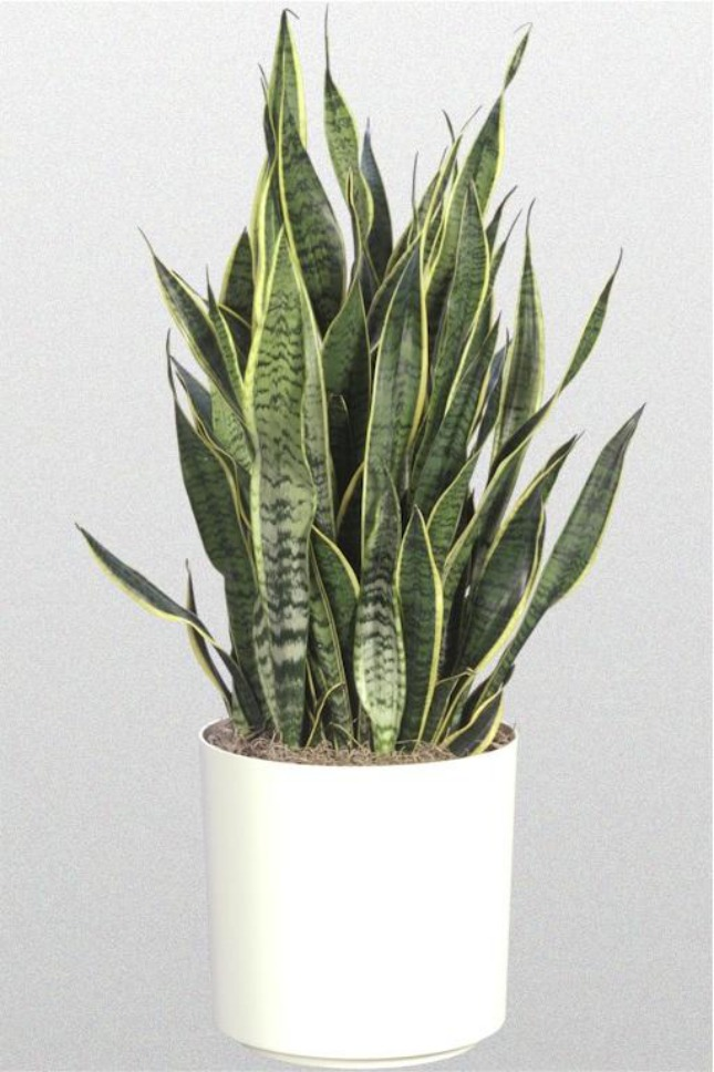 15 House Plants For Urban Dwellers Brit Co Household Plants Plants Mother In Law Tongue