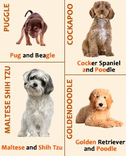 A Complete List Of The Most Desired And Special Mix Dog Breeds