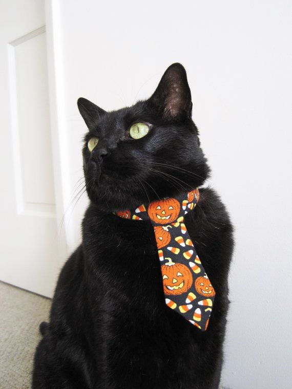 Hey, Hon, is this tie too loud for me to wear to work on Halloween?