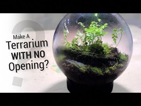 How To Make A Terrarium Without An Opening Youtube