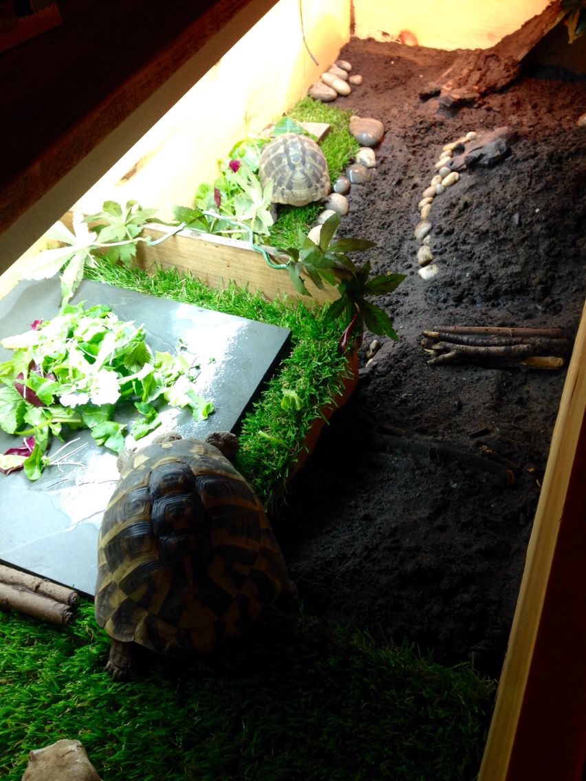 Slate tile is perfect for tortoise plate to stop them mixing dirt
