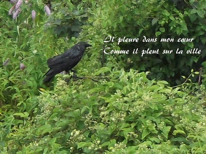 """Il pleure dans mon cœur / Comme il pleut sur la ville - Poème de Paul Verlaine, du recueil """"Romances sans paroles"""", dit par Pierre-François Kettler."""
