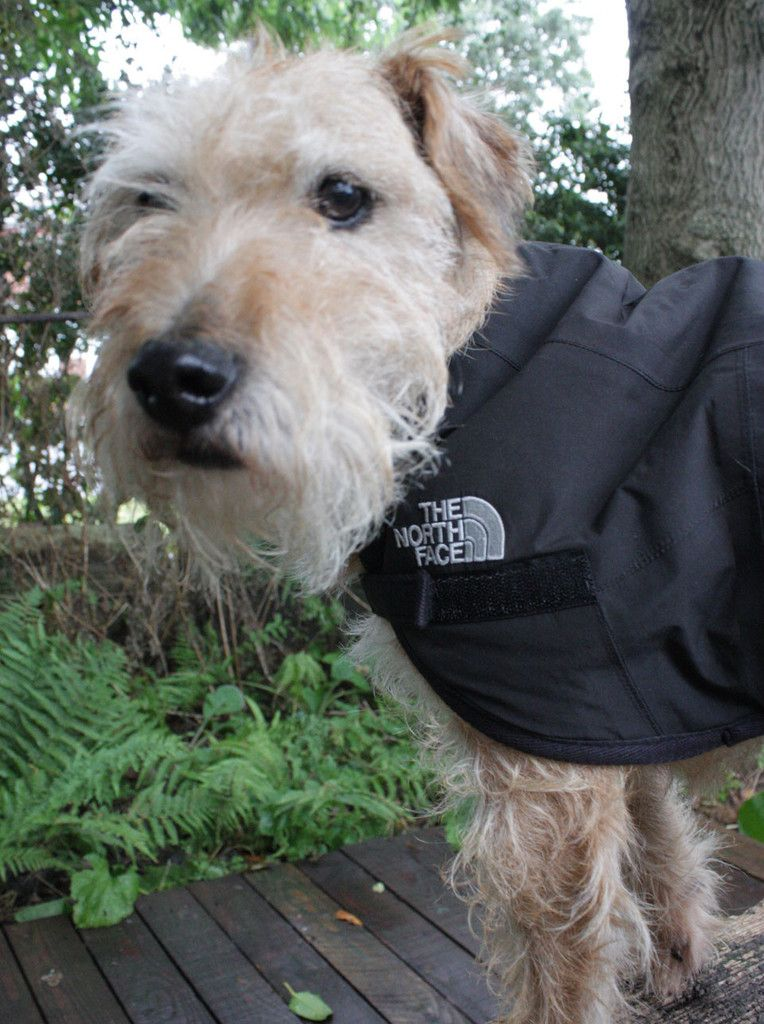 Recycled North Face Dog Coat Black Waterproof dog coats