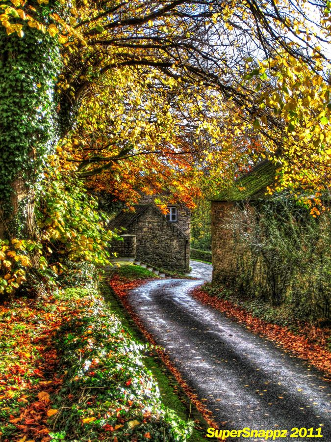 Autumn road England trees Yorkshire Country roads