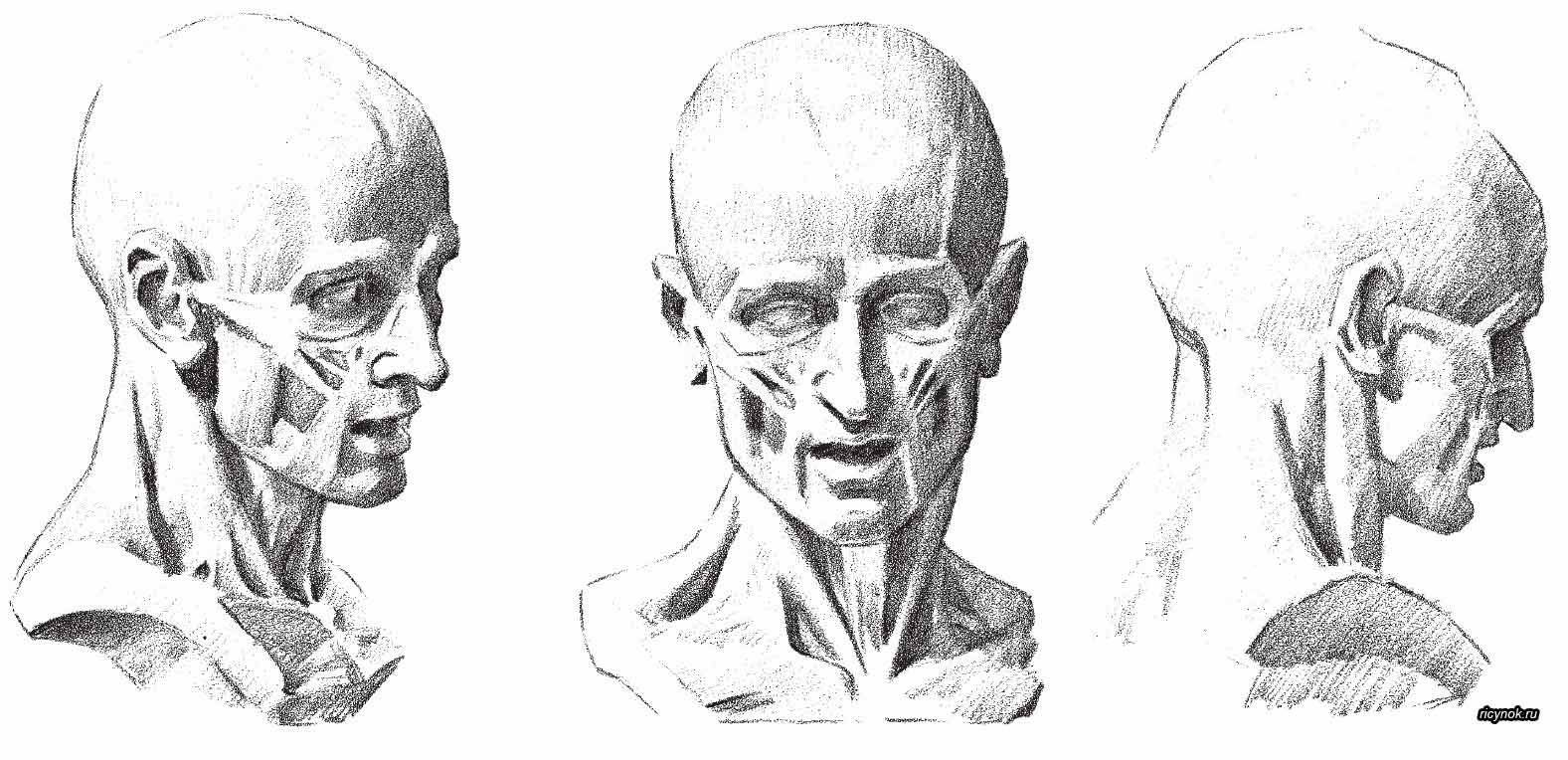 Pin by Stas Snezhkov on анатомия головы   Pinterest   Anatomy ...