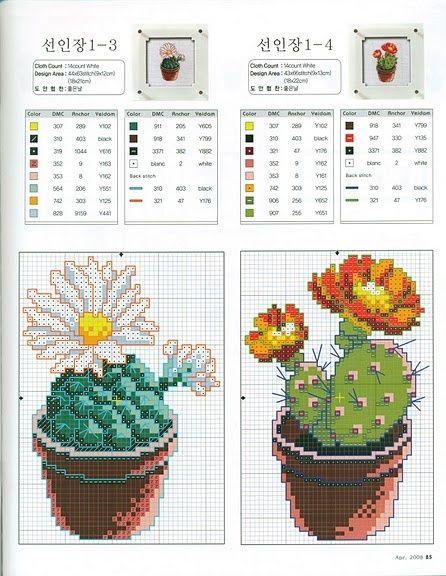 Serie de Cactus 1