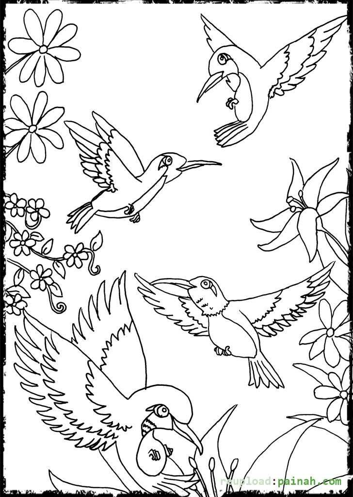 Hummingbird Coloring Pages Flower - Coloring Pages | Coloring Pages ...