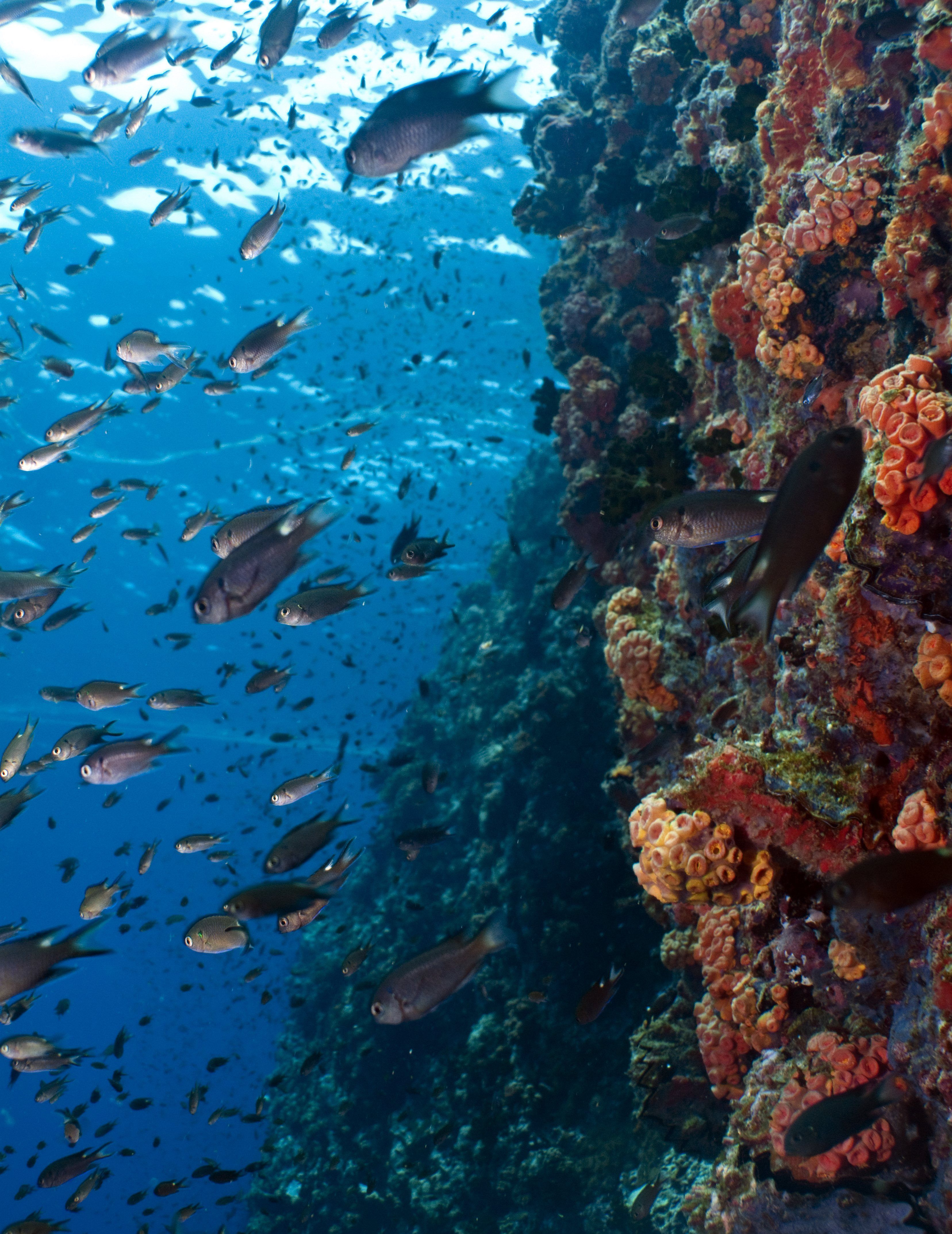 Fish aquarium in surat timings - Join Our Project And Enjoy Daily Dives To Visit The Coral Reefs Here You Are Plunged Into A Different World With Magnificent Examples Of The Diffe