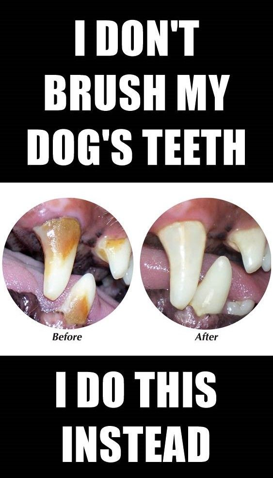 How to Keep Your Dog's Teeth Clean At Home Without