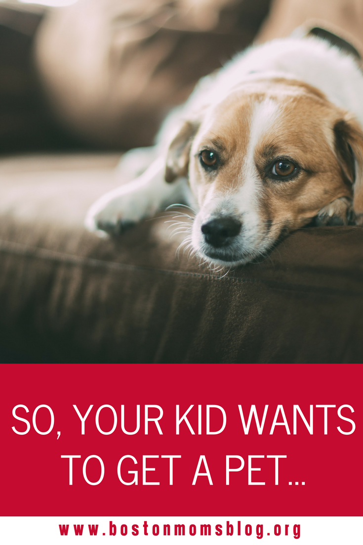 Watch How to Get a Pet (For Kids) video