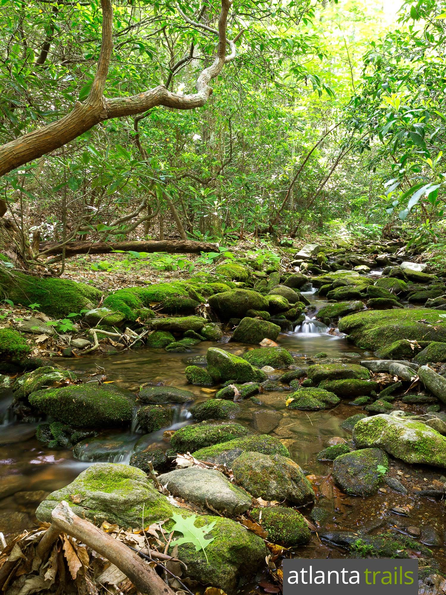 Hike the Byron Reece Trail to Blood Mountain on the Appalachian Trail in North Georgia