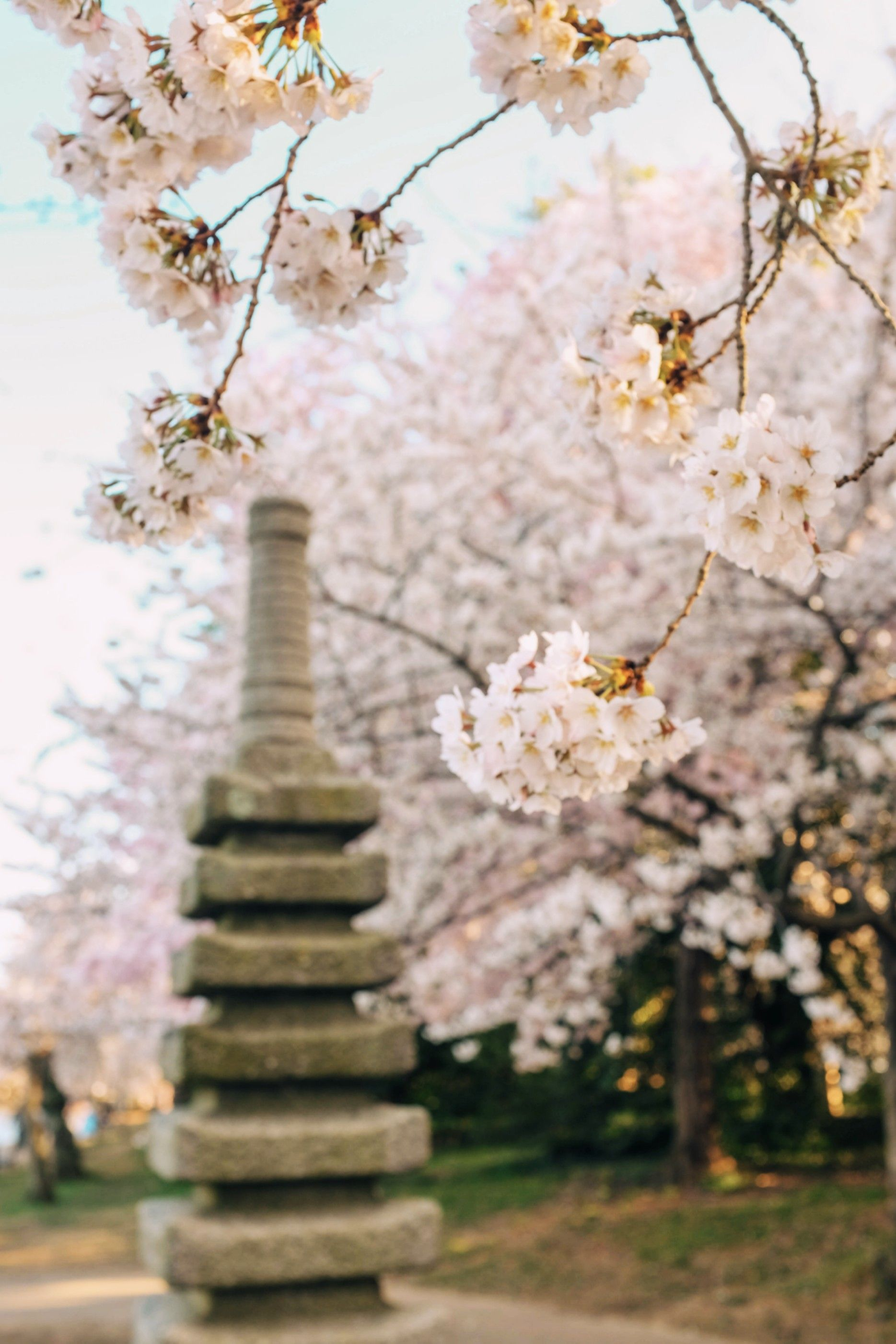 Cherry Blossom Flowers Pretty Pink Colorful Floral