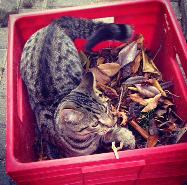 Rescue  Cat | Pawshake Auckland