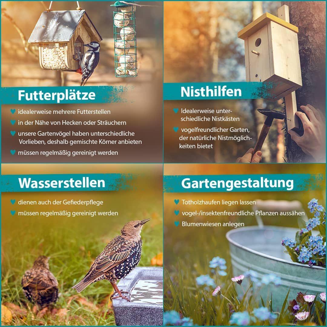 Die Zahl Einheimischer Wildvogel Ist Seit Jahren Rucklaufig Weil Die Nahrungssuche Fur Sie Immer Schwieriger Wird Aus Diesem In 2020 Bird House Outdoor Outdoor Decor