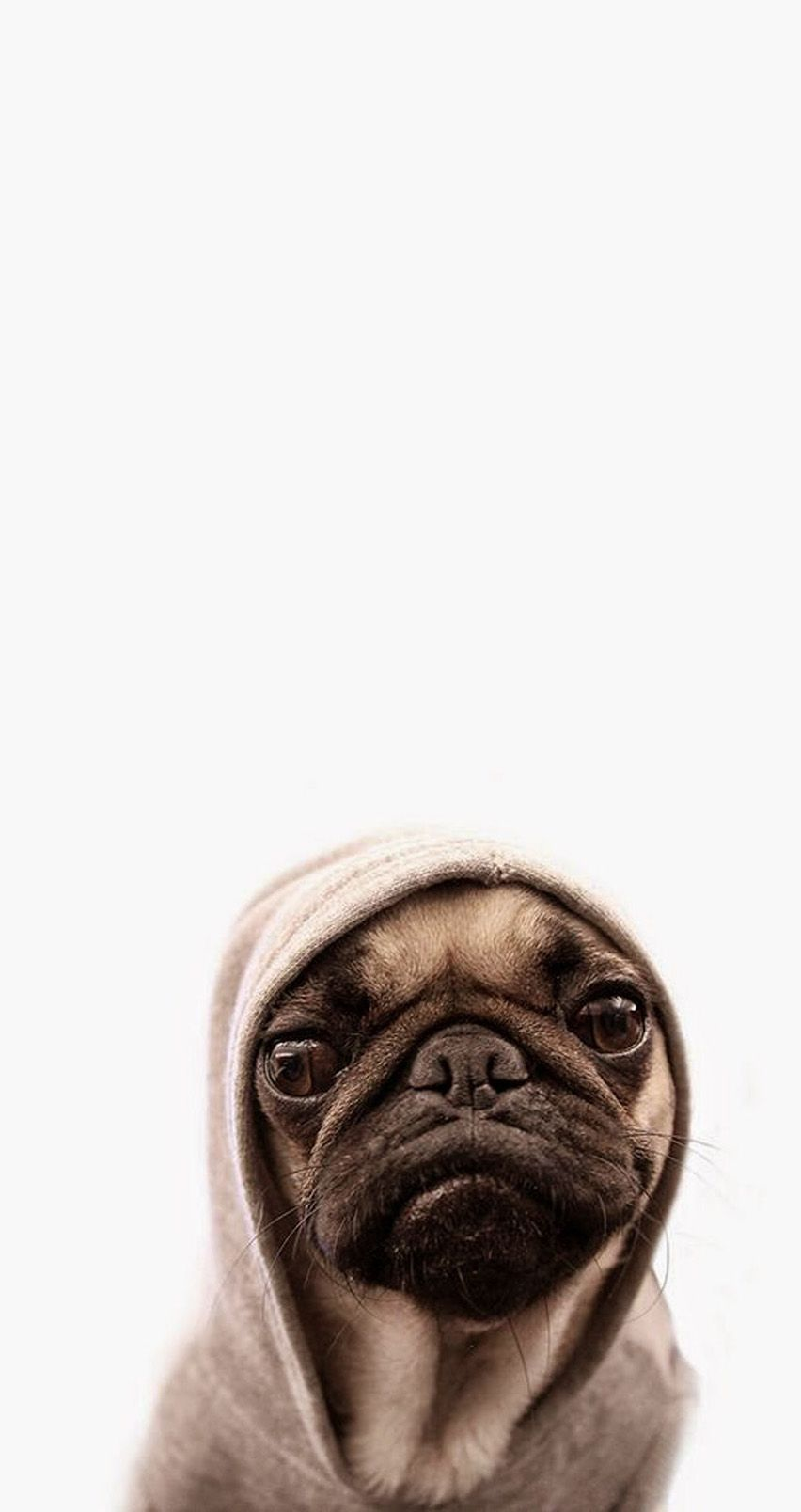 Cute pug. Tap for more Cute Pug Dog HD Wallpapers