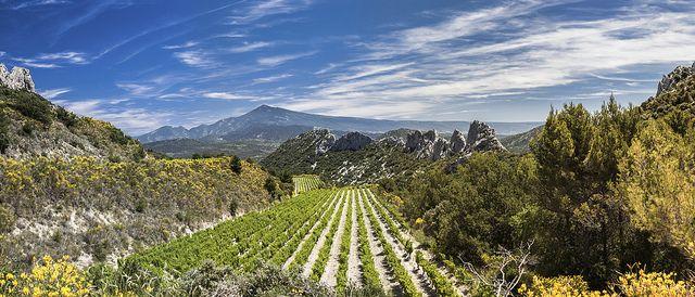 Dentelles de Montmirail, panorama sur le Mont-Ventoux ,Veaucluse, Provence, France.