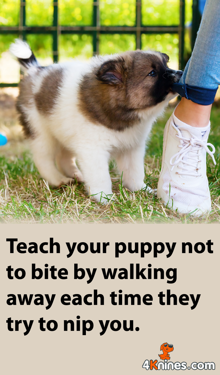 Biting Can Be Cute For A Puppy But Very Dangerous For A Full Grown Dog Many Puppies Will Bite For Attention So You Can D With Images Puppy Biting Puppy Training Puppies
