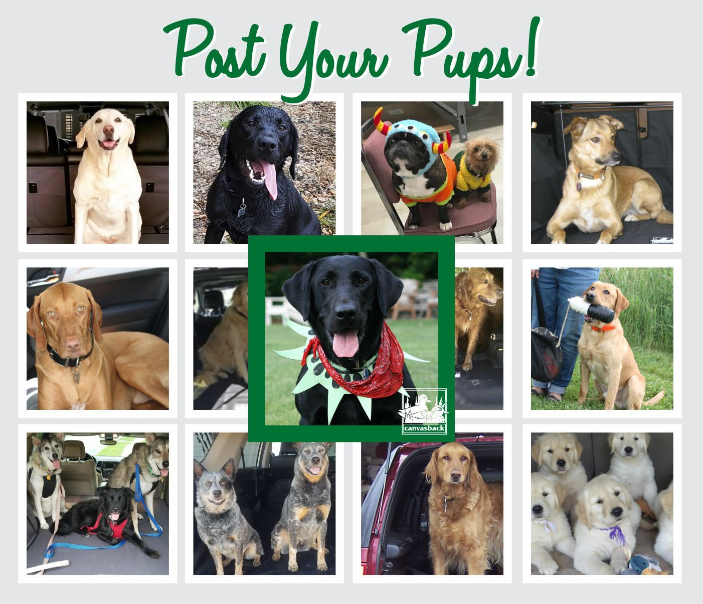 Pin By Canvasback Cargo Liners On Fun With Chester Puppy Eyes