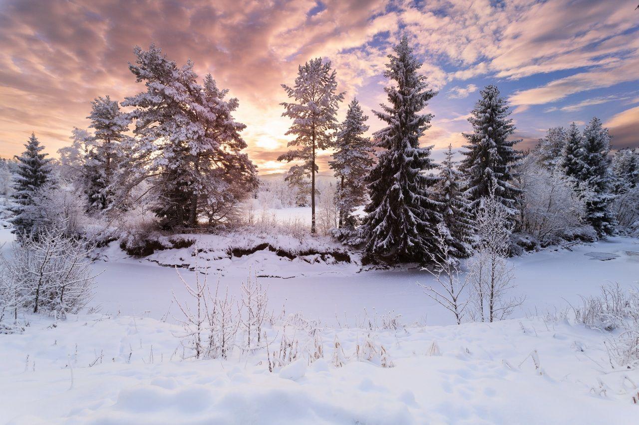 Hiver Neige Picea Arbres Nature Fond Ecran Hiver Paysage Hiver Coucher De Soleil Hivernal