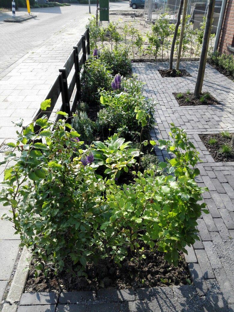 Ontwerp voortuin oprit door svm homestyling tuinontwerp for Oprit ontwerp